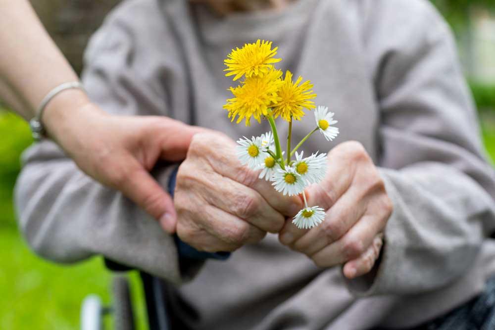 Sensory Garden Benefits for Seniors | Claridge Court